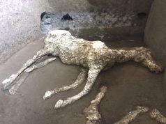 Eccezionale ritrovamento agli scavi di Pompei riportato alla luce lo scheletro di un cavallo bardato appartenuto, forse, ad un generale