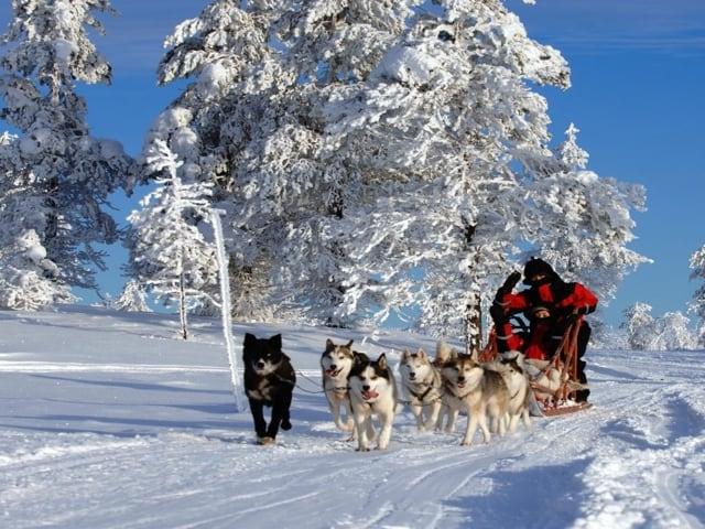 Natale tra laghi, foreste e Santa Claus, nella meravigliosa Lapponia-2