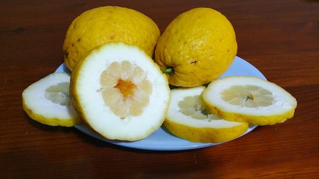 insalata di limoni procidana