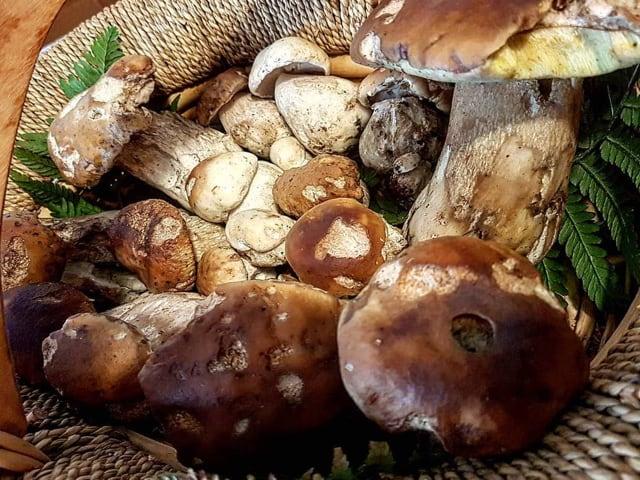Ritorna la Sagra dei funghi porcini a Cusano Mutri