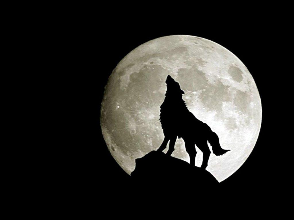 Il simbolismo del lupo per gli Irpini, antica popolazione italica-3